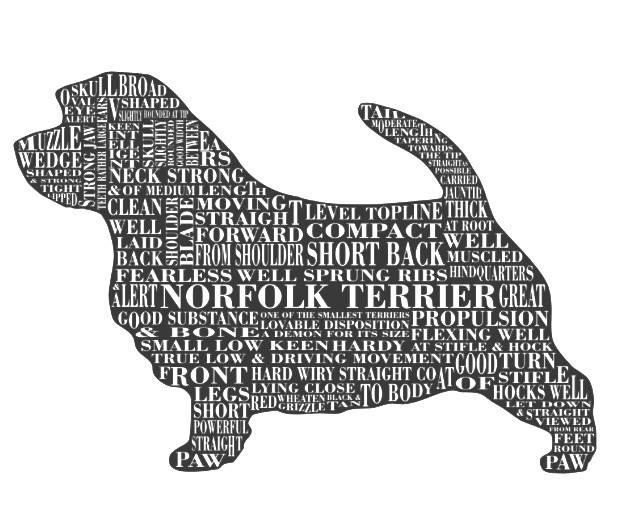 The-Norfolk-Terrier